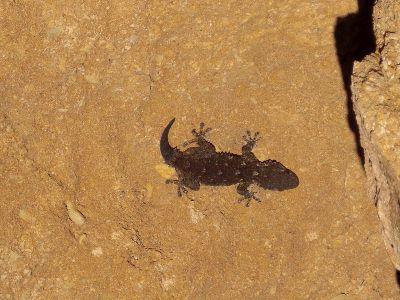Lizard Imprint